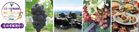 ぶどう収穫体験 地ビールランチツアー