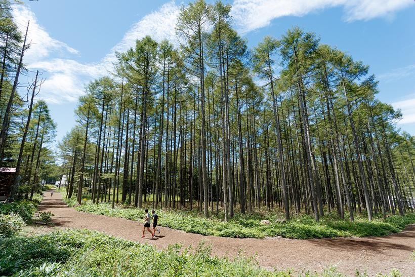 林間ジョギングコース