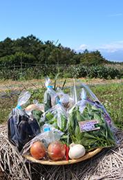 季節の野菜セット各種