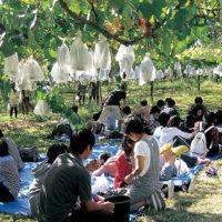 関観光農園