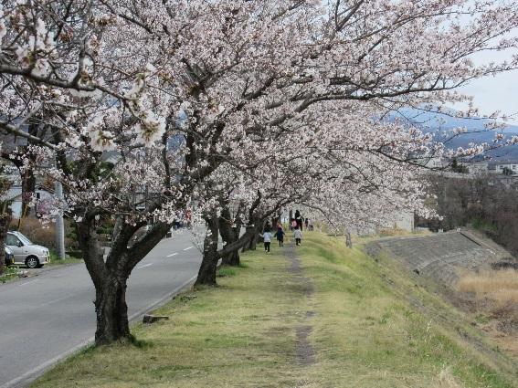 spring_006