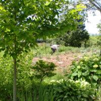 (6-17)奥本農園0488